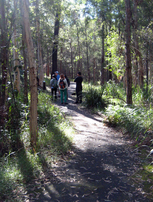 The Stockyard Creek Circuit is an easy walk and you might even see a Koala