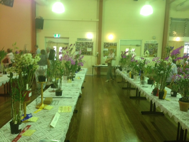 orchid shows queensland