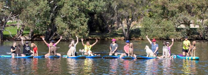pups on sups events, dog obedience training, sup perth, sup with your dog, things to do in perth in october, things to do with your dog, sup lessons, sandy reserve bassendean