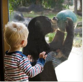 teddy bear picnic fun perth zoo Sun Bear