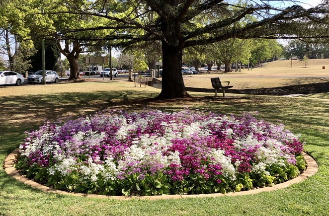 The Toowoomba Carnival of Flowers is an easy day or weekend out from Brisbane