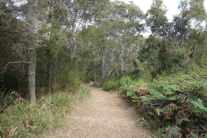 track,trail,dog,friendly,abrahams,bosom,nsw,shoalhaven,walkcurrarong