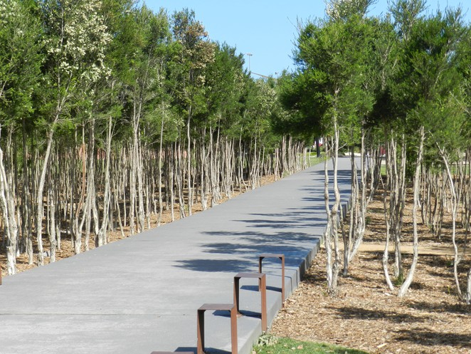 tree stand, casey fields, walking track, wetlands, walking tracks in casey, walking tracks in cranbourne, lakes in casey,