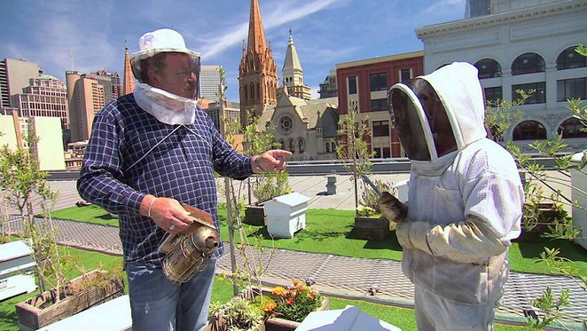 urban beekeeping in federation square
