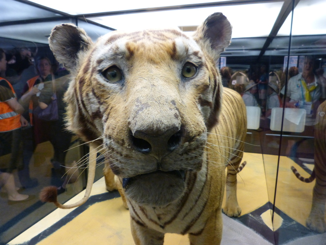A Room for the Wild, Ipswich Railways Workshops Museum,Tiger