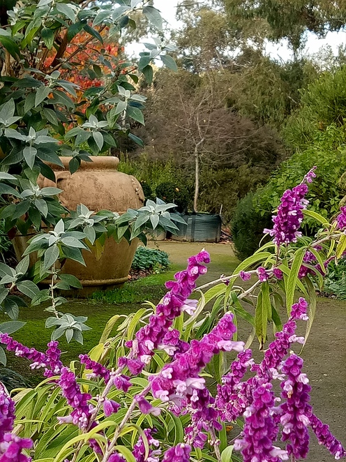 Gardens, lillies on brougham, eltham, nursery, plants, fruit trees, cafe, lunch, Breakfast, giftshop, homewares, gifts,