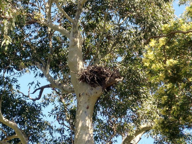 hunter, wetlands, centre, sea, eagle, nest, animal, spotting,
