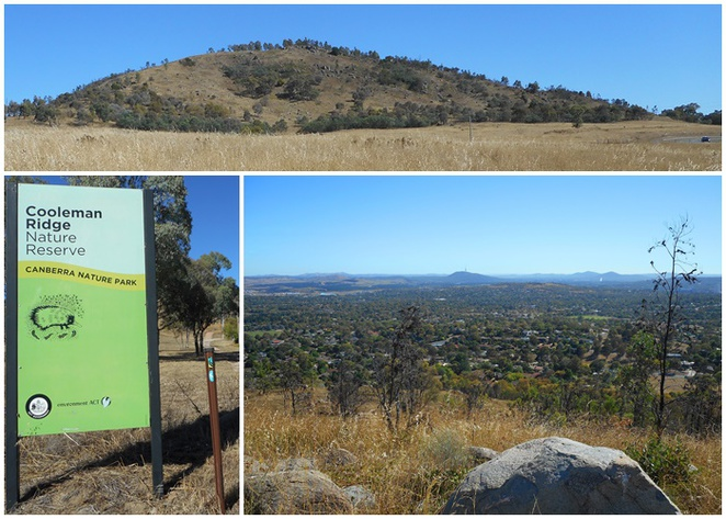 mount awarang, walks, bushwalks, canberra, tuggeranong, woden, western creek, ACT, mountains, hills, fitness,