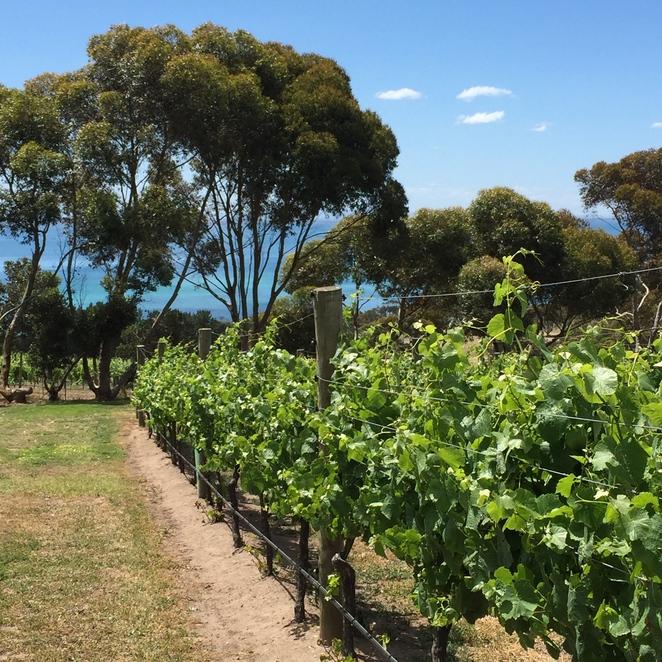Outdoor dining, dining in the fresh air, Jack Rabbit vineyard, House of Jack Rabbit, Jack Rabbit Restaurant, Michellina van Loder, coastal dining