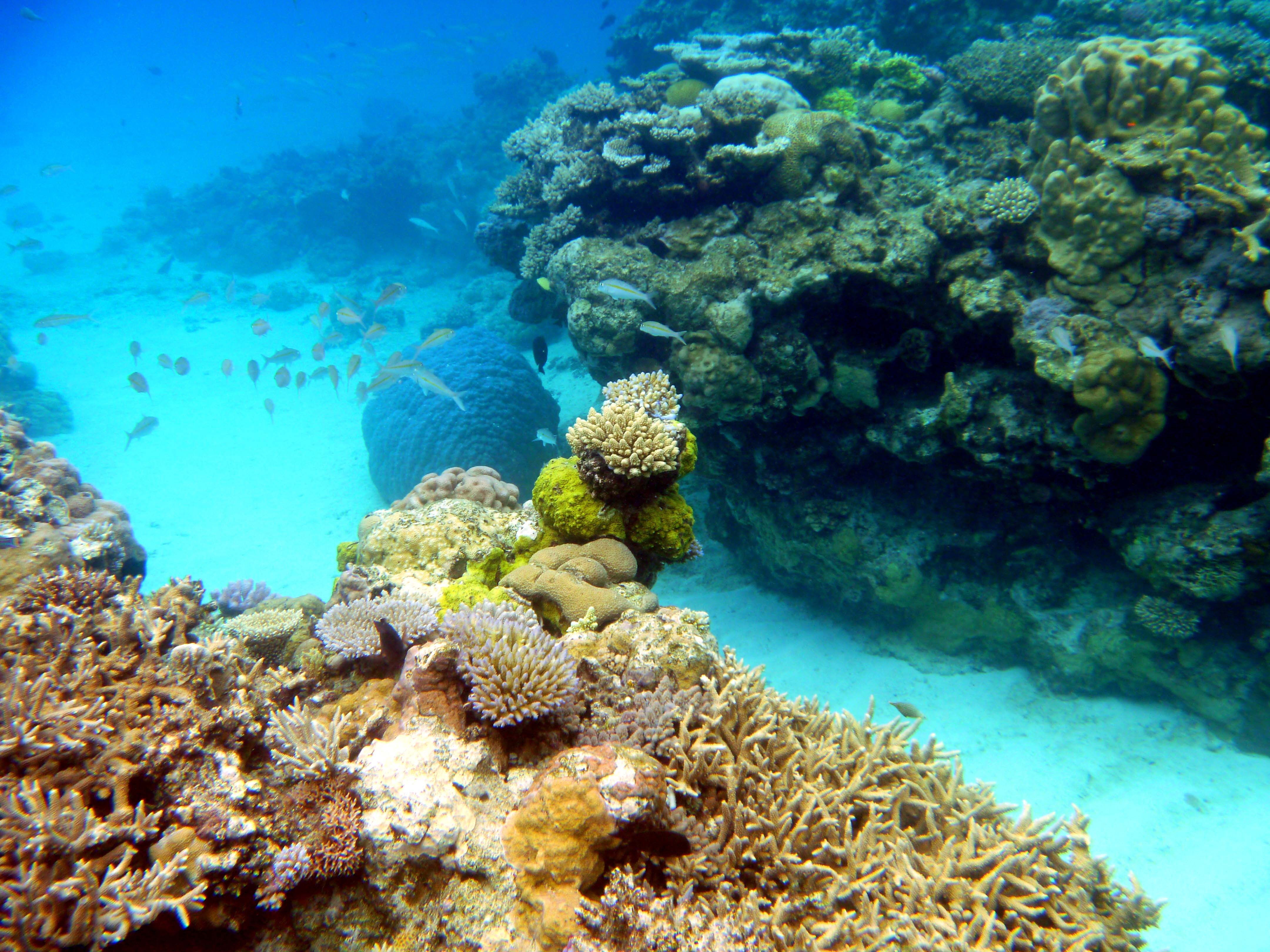 What to do in Lifou