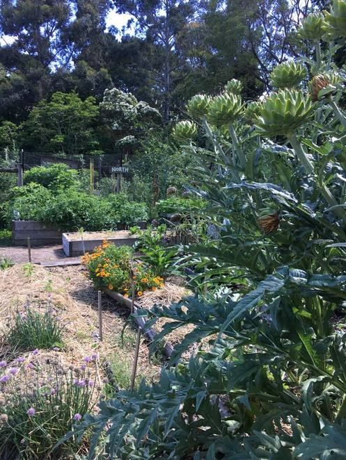 Poetry, open mic night, singing, community, sustainability farm, Melbourne, Yarra Valley, Ecological, Horticulture, Fun things to do, family, kids, education