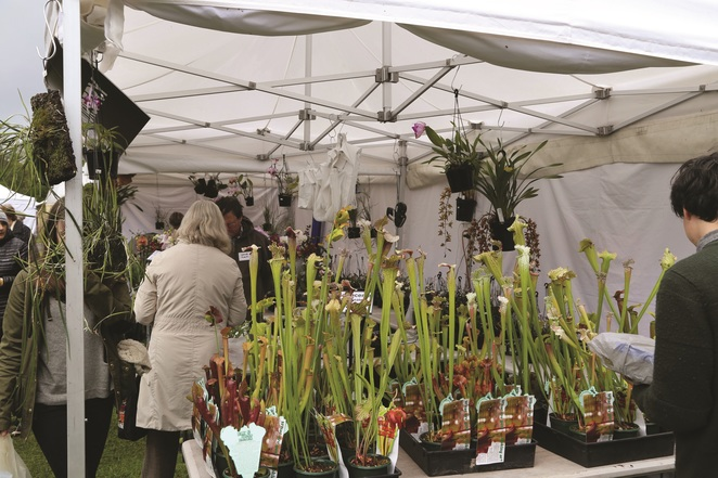 rare plants expo fair collection botanical gardens