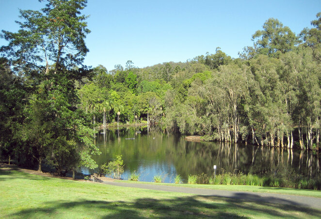 The lake in the back area of the Brisbane Botanic Gardens