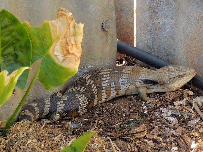 school holidays activities, anzac day, fun things to do, fun for kids, free things to do, school holidays, history, in adelaide, blue tongue lizard, animal expo