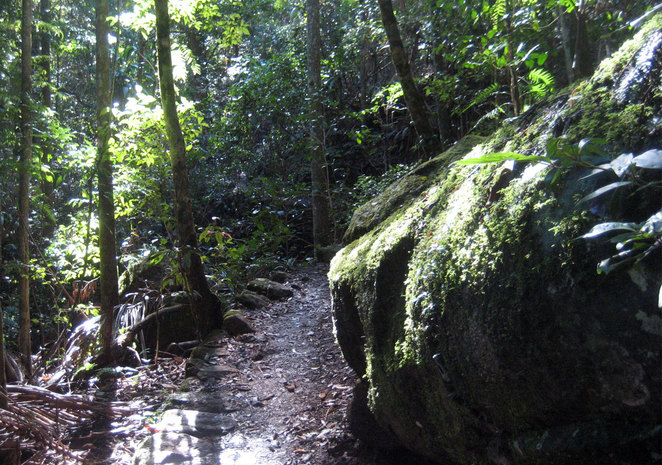 Mt Tamborine is full of tracks through beautiful rainforest