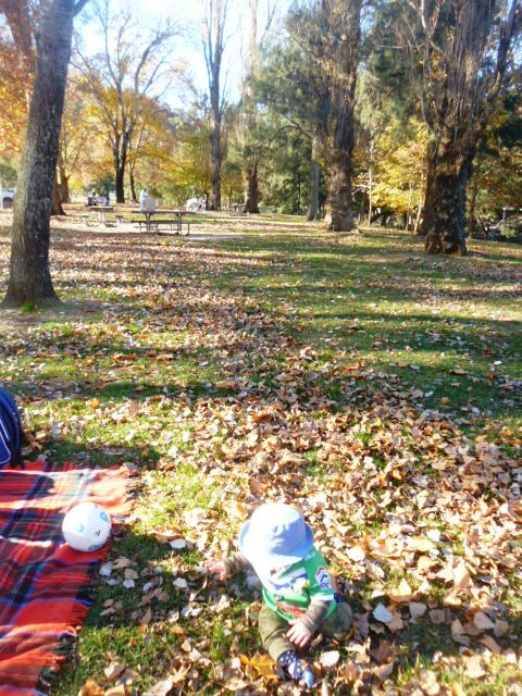 Ten reasons to visit the Cotter Reserve this autumn