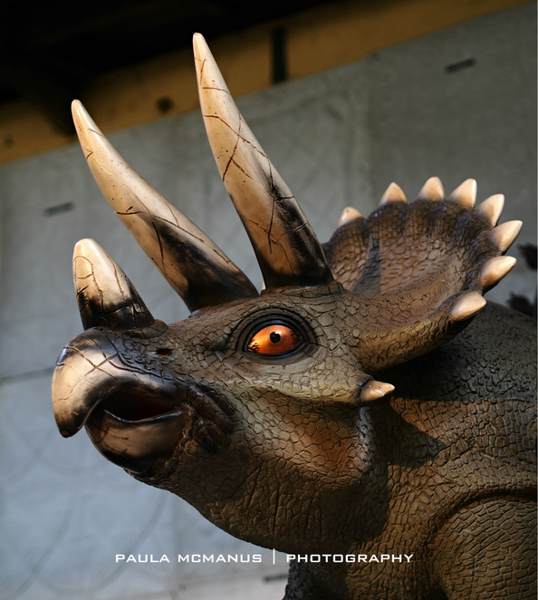 Triceratops, Dinosaurs Alive