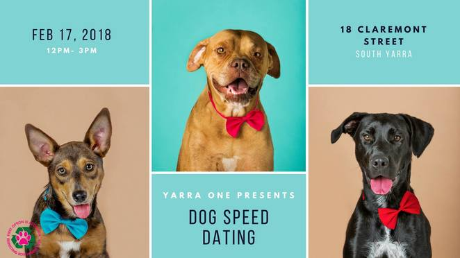 Valentine's Day Dog Speed Dating Yarra One