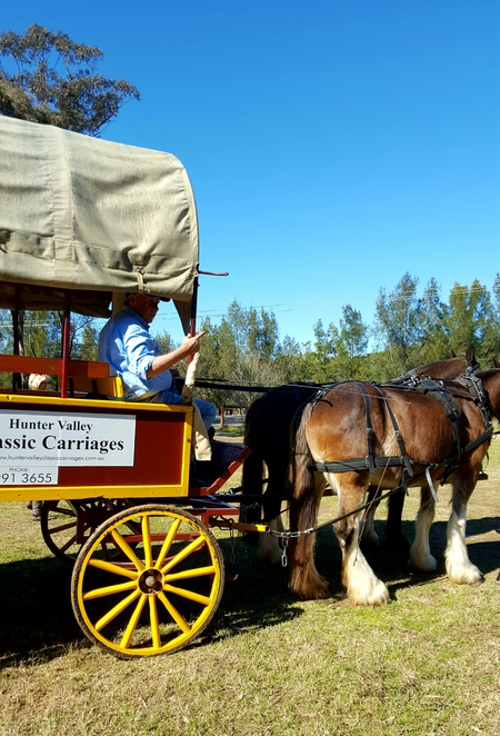 Carriages, horses, travel, Hunter Valley, Pokolbin