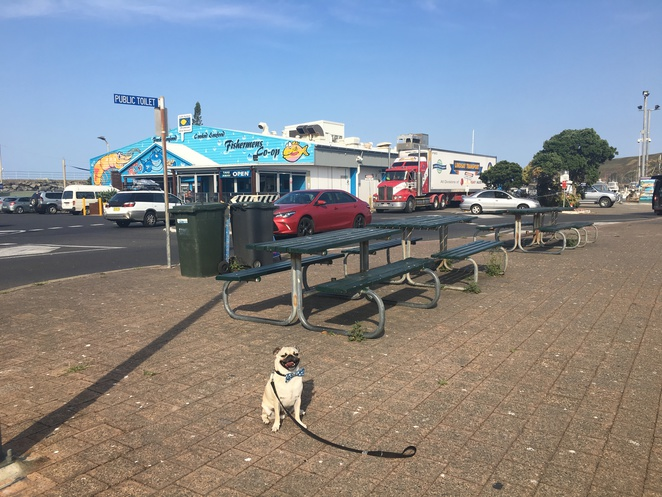 coffs harbour, fishermens cooperative, seafood, fresh, oysters, new south wales, fish and chips, waterfront, food, restaurant, fishing bait, coffee