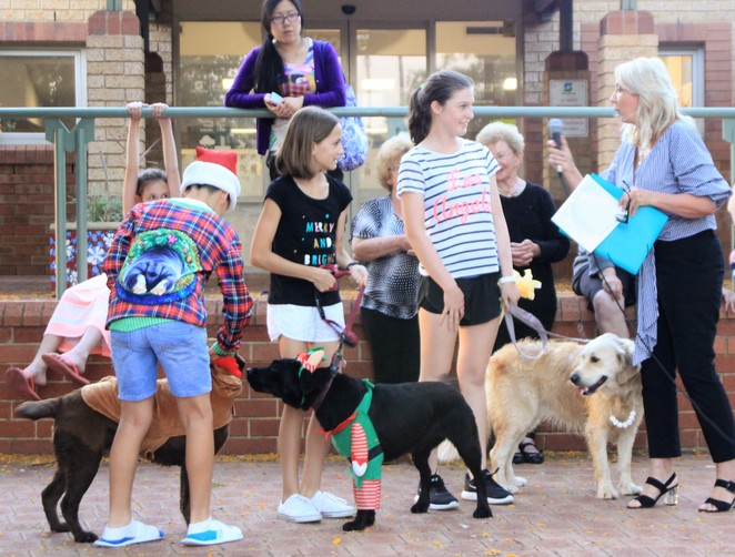 Dogs, dog show, family, markets, Dogz in the Wood, Inglewood on Beaufort Monday night markets,