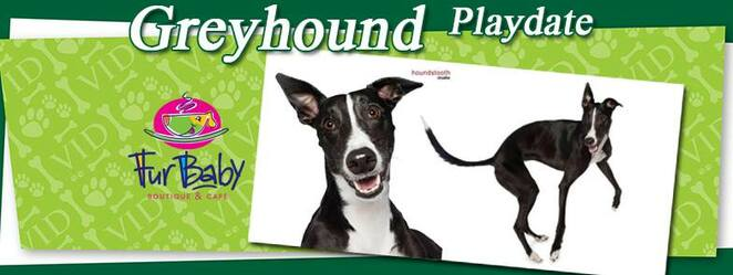 Greyhound,playday