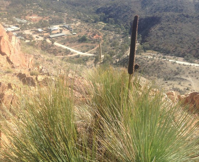 Griselda Hill Walk, Arkaroola Village