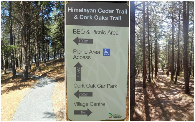 himalayan cedar forest, oak forest, canberra, national arboretum, ACT, bushwalks, short walks,