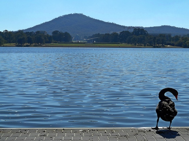 lake burley griffin, parkes, canberra, ACT, swans, birds, lakes, things to do in canberra, lake burley griffin attractions, things to do in parkes, national flag display, parliamentary triangle,