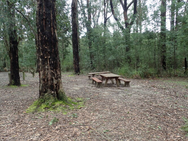 Lyrebird Forest Walk, Mirboo North, bushwalk, forest, South Gippsland, picnic, forest, wildflowers, walking track, lyrebirds