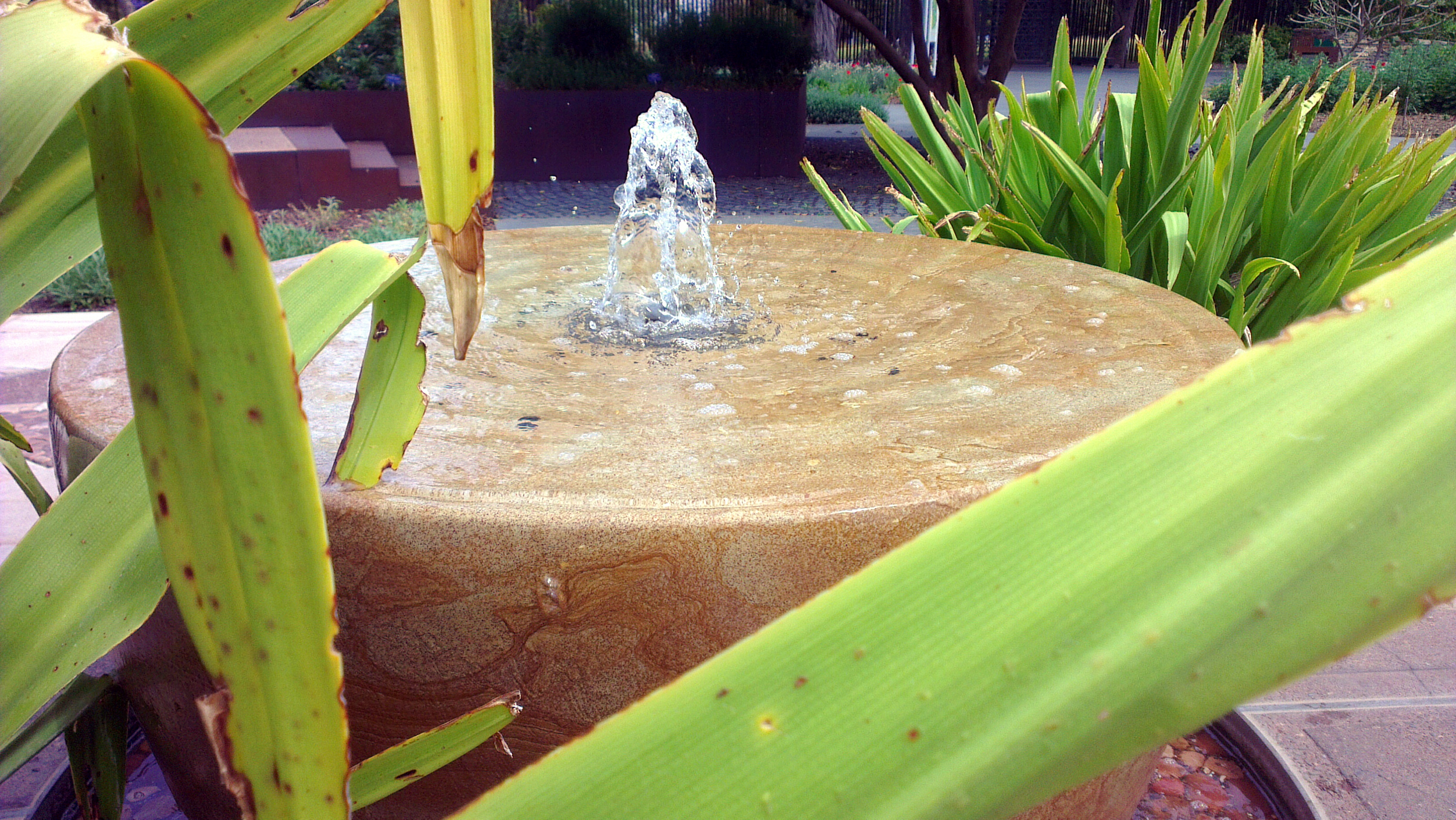 Photoh smartphone photography course adelaide by hayley for Garden water features adelaide