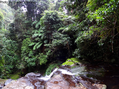 Picnic Rock, Green Mountains, Gold Coast Hinterland, mountain walks