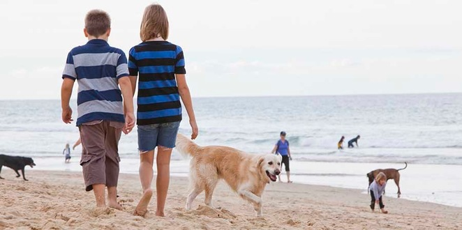 Responsible Pet Ownership - Pop Up Booths, access to resources, enjoy pets at home, cleaning up after your pet, exercising dogs in public, where to take dogs on and off-leash, Mountain Creek, Buderim, FREE event, best paw forward
