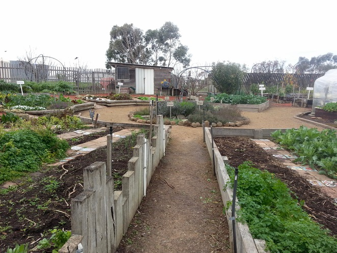 Surfside Primary School Kitchen Garden