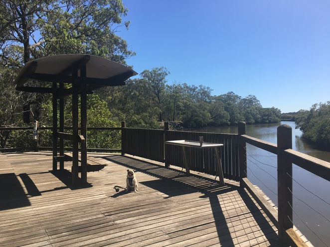 tingalpa creek reserve, tingalpa, dog friendly, bushwalking, bushwalk, brisbane, eastern suburbs, southern suburbs, redlands, moreton bay, horseriding, hiking, nature, barbecue, fishing, fishing platform, picnic, picnic area, capalaba west, capalaba