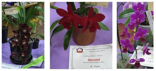 Toowoomba Orchid Show winners