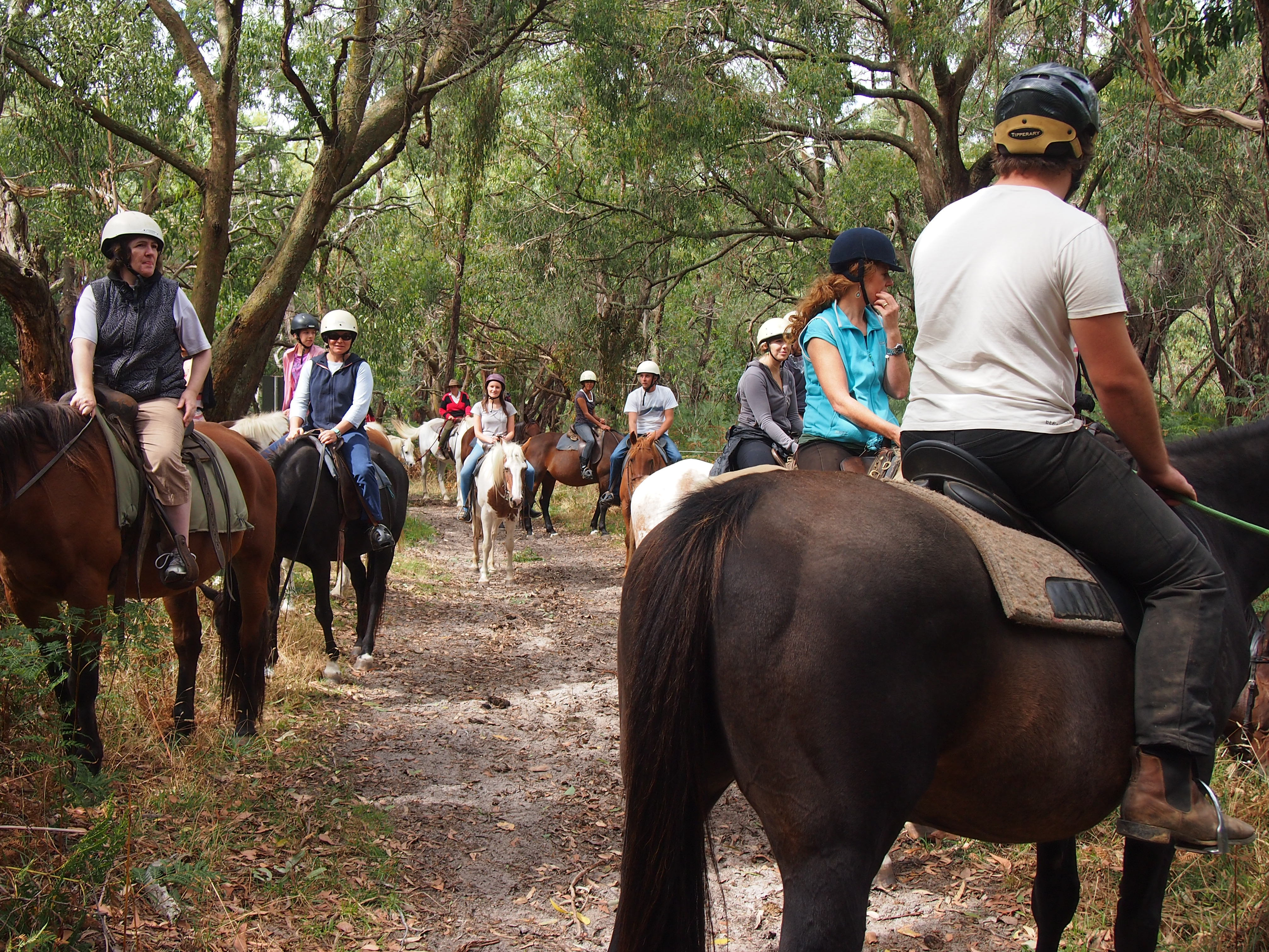 Horse riding coupon melbourne