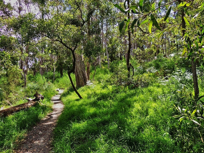 adelaide, park, conservation park, trail, dogs, adelaide hills, creek, free, mount george, vegetation