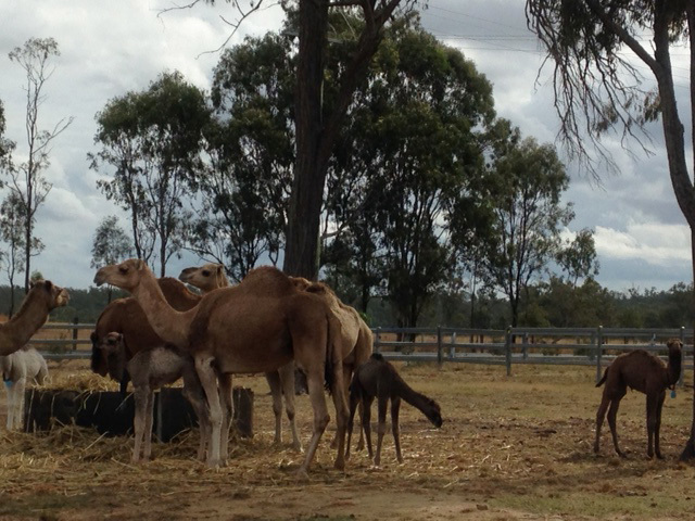 Animals & Wildlife, Health & Beauty, Harrisville, Scenic Rim, Unusual Things to Do, Near Brisbane, Shopping, Day Escapes, Tours