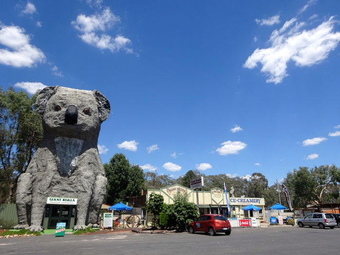 big koala, grampians, gariwerd, road trip, sculpture, australia, travel, tourism