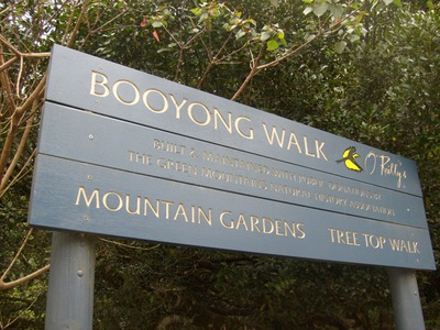 Booyong Walk O' Reilly's Lamington National Park