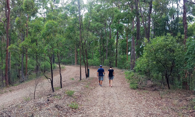 There are a couple of fire trails leading off from the picnic area, including one to Bellbird Grove