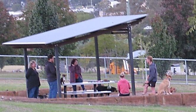 Dog Off-leash area socialising Clearview Street Park Newtown Toowoomba