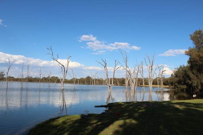 farmstay, glamping, bolgart, avon valley, wheatbelt. outback, boshack outback, family activities,