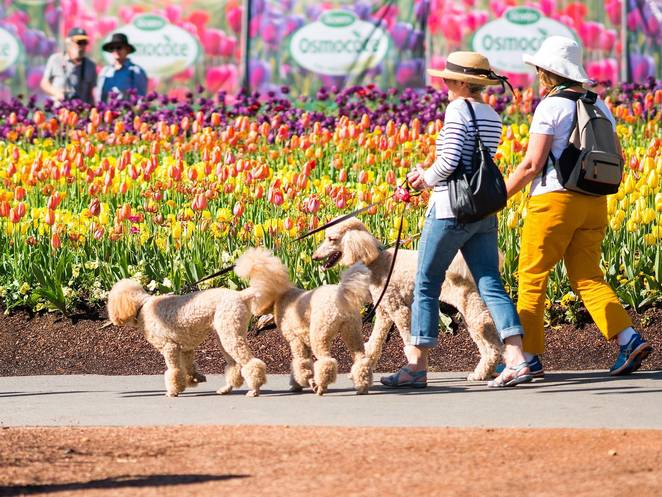 floriade, dogs day out, canberra, dog events in canberra, events, september, october, best dog events in canberra, whats on, floriade events, last day of floriade,