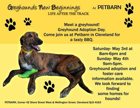 greyhound rescue, rehome, charity,