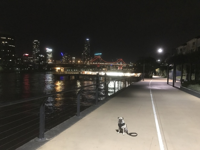 lookout, brisbane, brisbane skyline, night, outlook, city lights, view, kangaroo point, mt coottha, ascot, bartley's hill lookout, highgate hill park, highgate hill park lookout, riverwalk, new farm, story bridge, wilson's outlook