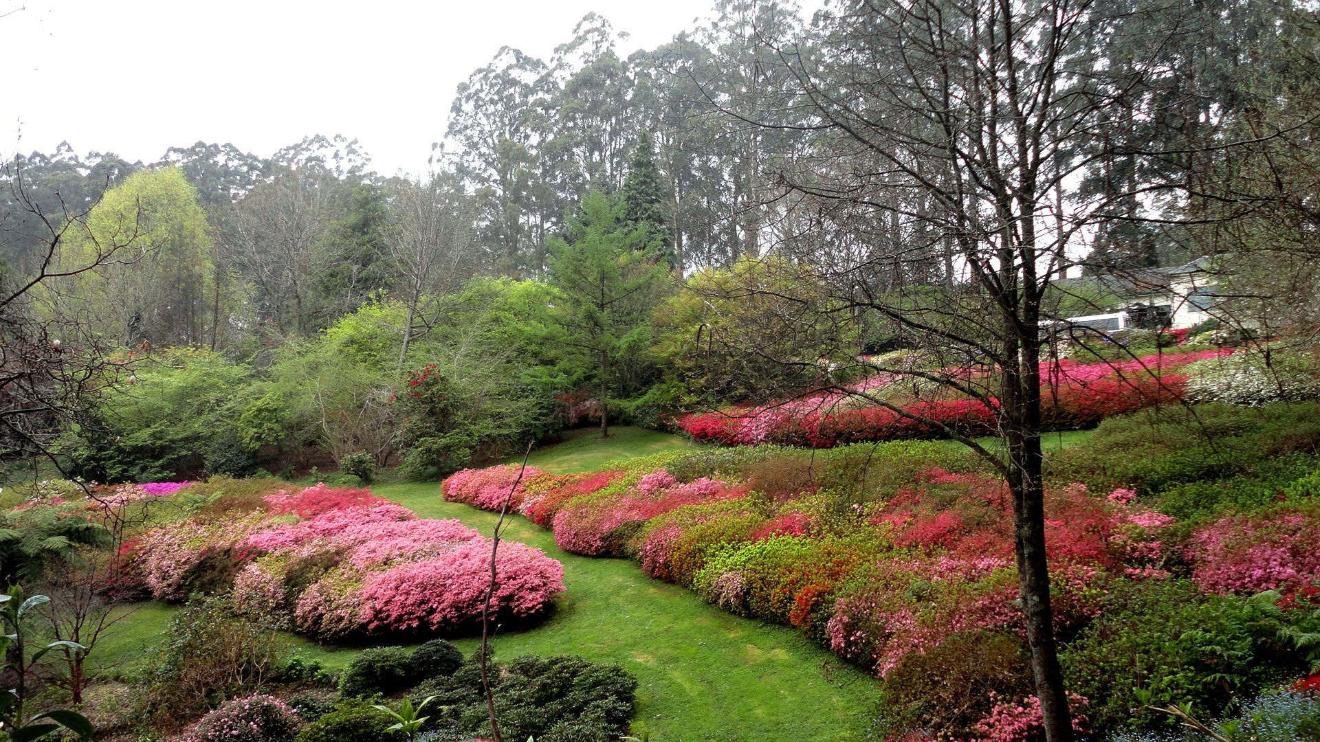 7 Reasons to Visit The National Rhododendron Garden ...