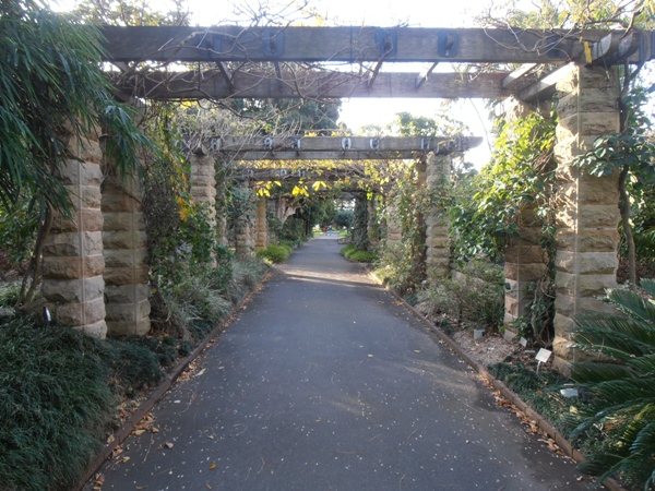 A tranquil walkway at Sydney's Royal Botanic Gardens