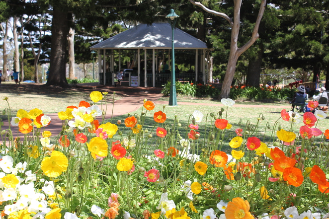 Picnic Point, cafe, playground, lookout, Toowoomba, day trip,